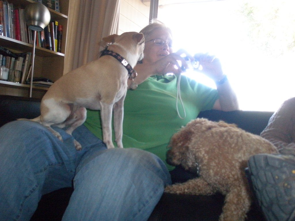 Mom and I were cracking up about dog-photo bloopers.