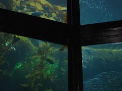 IMG_0861.JPG (joelaz) Tags: aquarium monterey acquarium