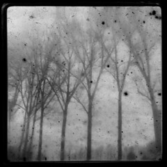 Dusty winter (Kat...) Tags: trees winter blackandwhite bw geotagged noiretblanc kodak hiver grain nb arbres brownie dust ttv throughtheviewfinder brownieflash geo:lat=50726731 geo:lon=3372889