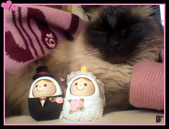 Missy y los novios (aunqtunolosepas) Tags: wedding pet cats pets cute love animal animals cat toy toys feline funny phone bea k750i ericsson sony sonyericsson boda juegos adorable movil marriage gatos cutie gato missy gata felinos felino felines animales mueco lovely cuteness gatitos mascota mascotas juguetes muecos gatita novios bandai phoneshot mueca divertido unazukin muequitos camaramovil bestofcats aunqtunolosepas goldstaraward