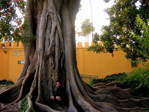 Large man-eating tree in Sevilla