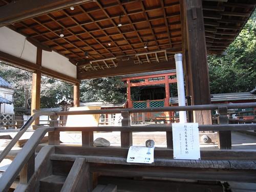 氷室神社(しだれ桜)-09