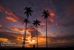Sunrise in Kuantan, Pahang Malaysia | AFY_4132e (a.faizal) Tags: blue sunset sea tree beach apple silhouette sunrise aperture nikon skies bea coconut sigma palm malaysia d200 1020 soe kuantan pahang potofgold naturesfinest blueribbonwinner firstquality supershot abigfave anawesomeshot superbmasterpiece flickrdiamond naturesilhouettes