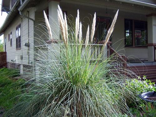 Floofy plant