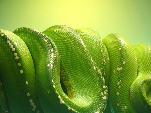 Green Draper Ease