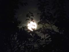 Moonshine through the leaves.... (niknak2016) Tags: fullmoon moon moonphotography moonlight moonsilhouette moonshine lunar night nightsky nighttime nightphotography dark darksky beautyinnature naturalbeauty nature natural naturephotography skyline sky skyphotography skyscape lookingup upabove space astronomy shine