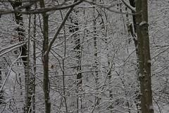 IMG_2731 (jaglazier) Tags: trees usa snow gardens landscapes indiana bloomington february 2010 deciduoustrees 2610 copyright2010jamesaferguson