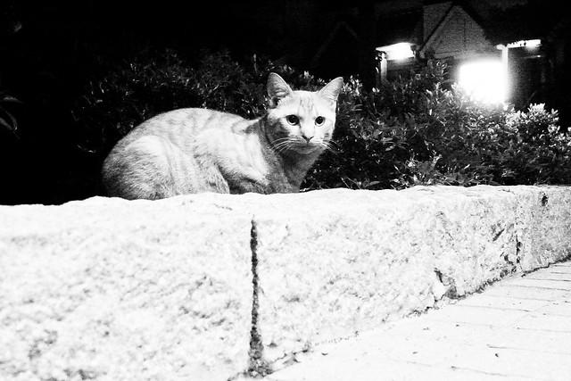 Today's Cat@2011-05-12