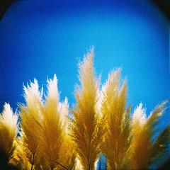 Senyera (almogaver) Tags: wood blue color 120 film yellow azul analog holga xpro crossprocess slide 200asa slidefilm plastic amarillo gelb catalunya blau agfa 青 groc 120mm portbou analogic holga120cfn 黄色 rsxii 120cfn agfarsxii cfn e6c41 almogaver procéscreuat agfarsxii200asa davidroca