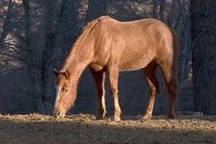 """Cowboy"" (David~O) Tags: california horse sierranevada loh mywinners johnsondale"