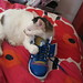 Monty Loves My New Adidas Top Tens