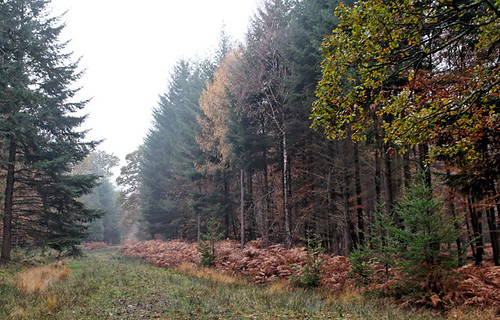 South Oakley Inclosure, Burley