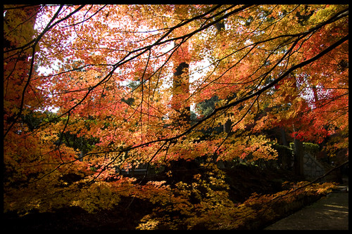 Autumn 2007 KYOTO