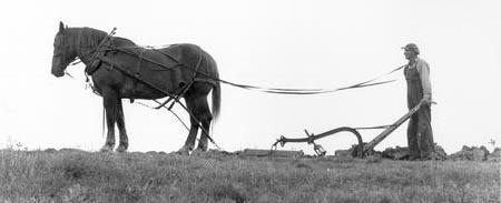 Arklys ir artojas