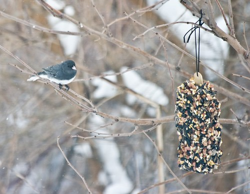 winter_birds-2.jpg