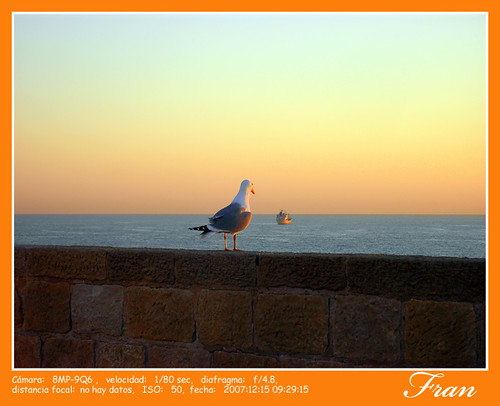 Gaviota ojeando el mar