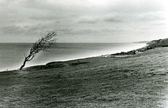 omaha beach (massi_pugliese) Tags: trees bw normandie albero normandy bianconero normandia puntidivista omahabeach bwemotions bwdreams bwart artlegacy bwartaward bwart1week kubrickslook bwart2601081620