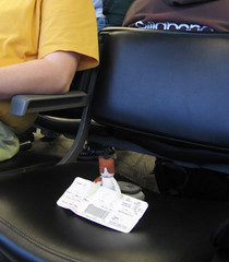 Toots getting ready to board the plane