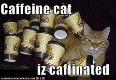 caffeine cat iz caffinated ((     )) Tags: cat funny lol can has cheezburger lolcats lolcode