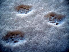 Soft As Cat's Pawprints... (poly_mnia) Tags: white snow colour colours athens greece pawprints explored expore  dearflickrfriend merhaba merhb  geniiloci catpawprints