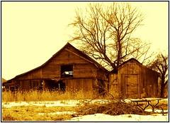 sepia weathered barns (Through Joanne's eye) Tags: old winter sepia barn rural march ruins farm country barns thumbsup joanne 2008 manthei weatherd photofaceoffwinner pfogold barnsepia canen