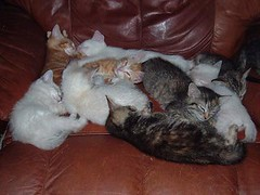 ball of kittens (boopers rescued cats) Tags: cats cute kittens felines