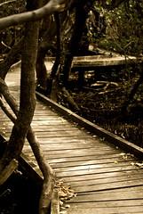 Board Walk (Kerri Afford) Tags: plants water sony mangroves flickrmeet stkilda sonya100 sonyalpha photofaceoffwinner acg1stplacewinner bestofaustraliaaustralia