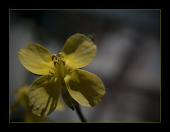 Luces y sombras (_Zahira_) Tags: shadow flower macro luz yellow lafotodelasemana flor sombra olympus amarillo nd nr ligh ngr e500 uro interestingness180 i500 35mmmacro