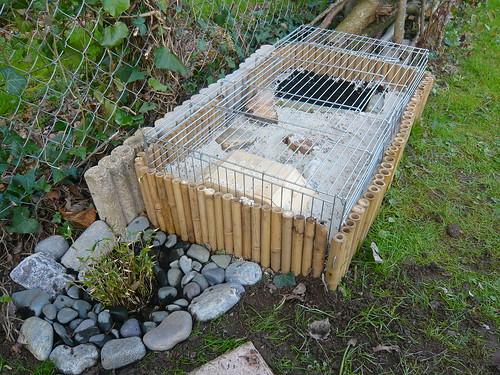 Du Japon dans un jardin: Une cage pour un cochon d\'Inde