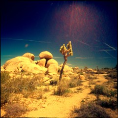 ~ Strange Happenings Out On Highway 61 (You'd Better Run) (Apologies to Bob Dylan) (Mackeson) Tags: dylan god buddha joshuatree buddhism pinhole bobdylan smores budweiser sacrifice palabra zero69 joshuatreenatlpark mackeson burningbushes highway61revisited zeroimage69 nutterbutters
