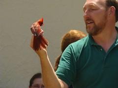 David and banded cardinal