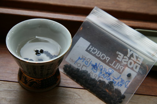 soaking morning glory seeds
