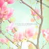 Spring is here with a shabby chic magnolia (claudiaveja) Tags: pink flower fashion advertising photography spring bokeh stock magnolia fotografia delicate shabbychic royaltyfree rightsmanaged claudiaveja stockphotographer fotocluj licenseimages serviciifoto sedintefoto cursfotocluj fotografieprodus fotografiacomerciala