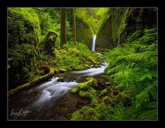Spring Canyon (Ryan Dyar) Tags: green oregon spring pacificnorthwest columbiarivergorge ryandyar
