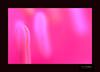 Incredable BANGLADESH 37/365 [Never Trust A Simple Word , Trust Deeds] EXPLORED] (HamimCHOWDHURY  [Read my profile before you fol) Tags: blue portrait black green nature canon faces sony surreal dhaka vaio rgb sylhet bangladesh framebangladesh digombor 595036hamimchowdhury 60ddlsreoscolorfulblackandwhitered lifeincrediblebengalgettyimagesbangladeshq2gettyimageshobigonj