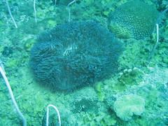 IMG_2496 (dcgreer) Tags: malaysia pulau redang pulauredang