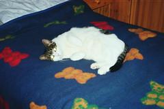 26A - Miebo auf meinem Bett (Kirayuzu) Tags: miebo katzen bett decke gummibären süs katze cat meinzimmer