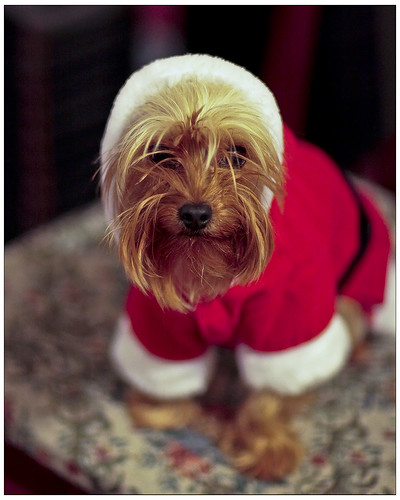 Trixie Claus