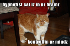Hypnotist cat (Neilwill) Tags: cat eyes control explore mind laser hypnotist 379 lolcat