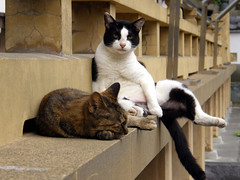 relax (hamapenguin) Tags: beautiful animal japan cat temple feline kamakura adorable neko amusing  straycat   evocative  supershot scintillating thebiggestgroup catspotting