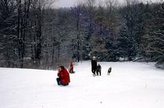 1978_03_011 (j_t_d) Tags: winter 1978 sledriding