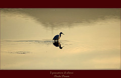 il pescatore di silenzi  - the fisherman of silences (swaily  Claudio Parente) Tags: tramonto natura uccelli reflexions animali wwf oro bareden aplusphoto naturessilhouettes goldstaraward bestminimalshot thegoldproject saariysqualitypictures magicunicornverybest