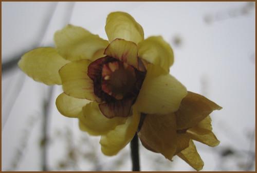 Winter flowers - Fiori d'inverno
