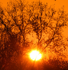 here comes the sun (jmtimages) Tags: morning winter orange sun cold tree leaves sunrise austin texas outdoor weekend sunday january freezing enero explore 2008 janvier soe impressedbeauty betterthangood