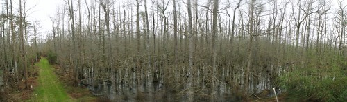 Swamp land in Springfield, Louisiana, USA