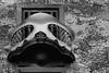 Balcony, Casa Batlló, Barcelona (el_mo) Tags: barcelona madrid b people blackandwhite bw españa white black building art valencia architecture de casa blackwhite spain mask balcony w catalonia seville espana architect artnouveau andalusia almeria architettura modernismo passeig barcellona gràcia spagna modernisme 43 batllo siviglia antonigaudí batllò bwdreams noveu