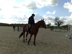 04032008680 (jacaranda4) Tags: cheval mare du concours stallion foal cso poulain dressage jument coty complet elevage