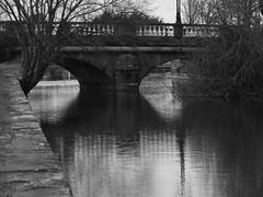 DSCF1139 (lynnjames54) Tags: bridge galway canal tress