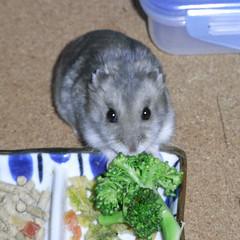 ブロッコリーを食べるコーキ