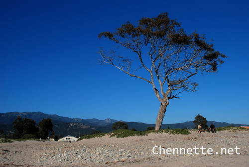 Carpinteria Tree and Sky